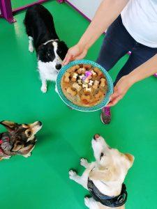 cuccioli con torta