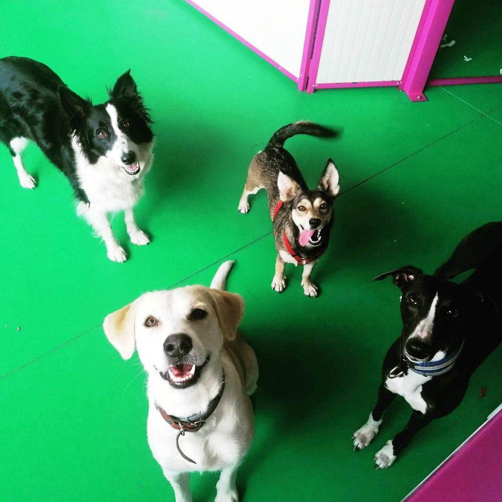 Open day all'asilo dei cani di Merate