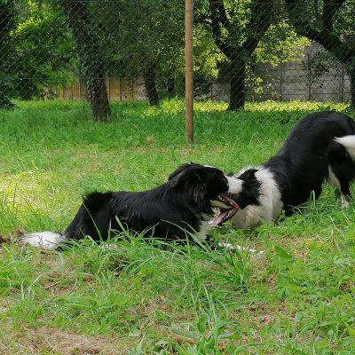 asilo per cani 10