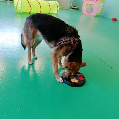 asilo per cani 4